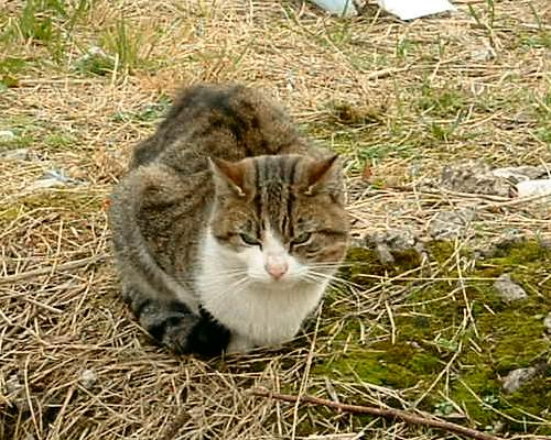 Wild cat on the site of the Sailors Home