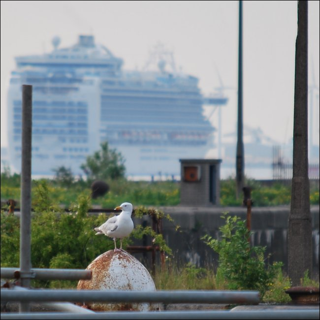 The Crown Princess on the Mersey