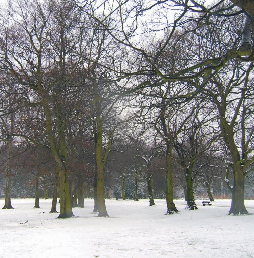Woolton Woods in the snow - 12th March 2006
